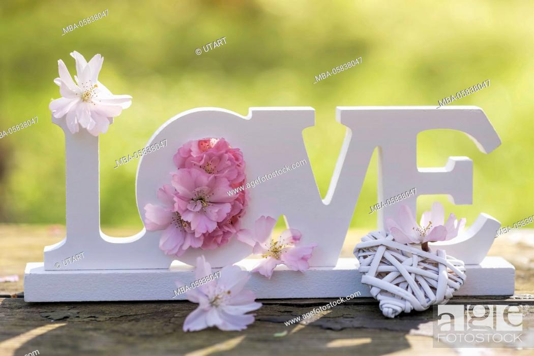Stock Photo: Photography in the back light. Stroke in white LOVE decorates with pink cherry flowers and white heart on old wood bank. light green background.