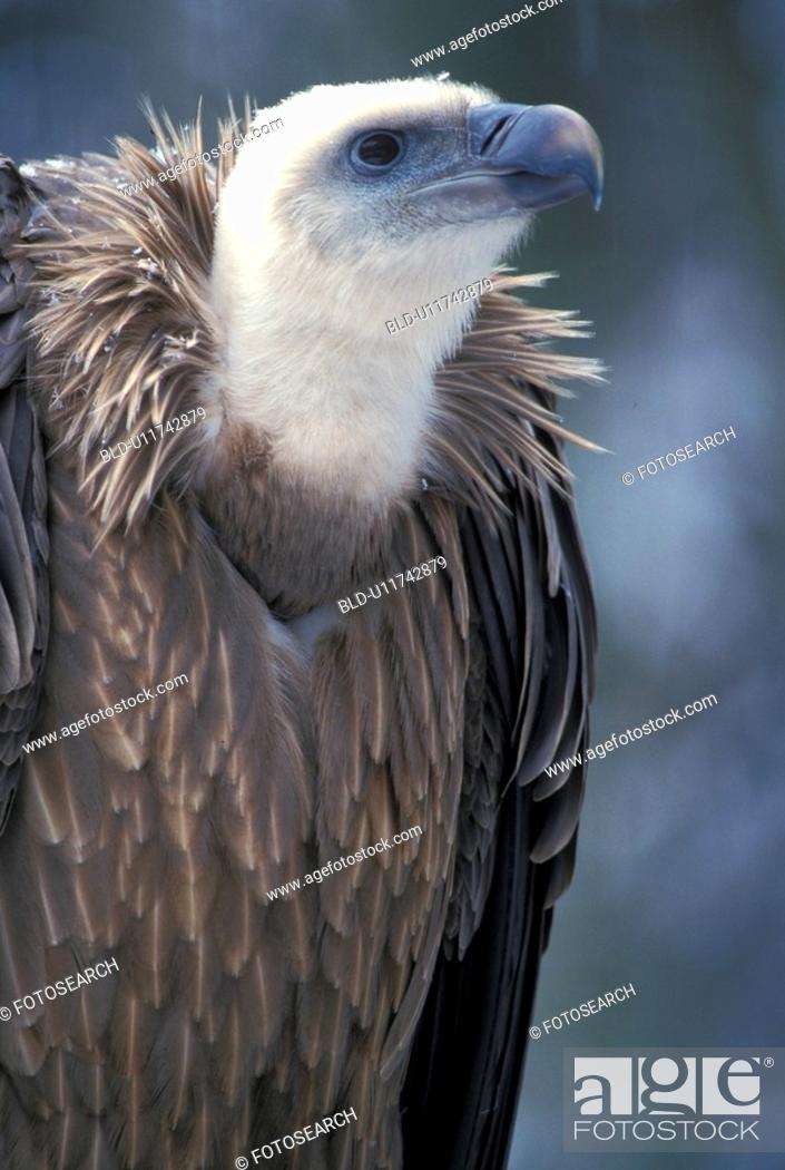 Stock Photo: Bird of prey.
