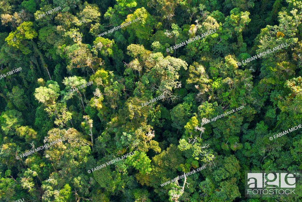 Imagen: Aerial view of rain forest in the Sierra Nevada National Park in the Venezuelan Andes.