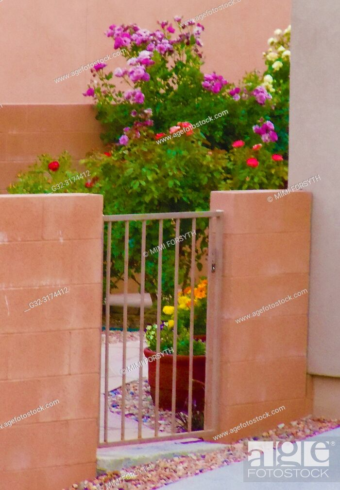 Stock Photo: flowers in yard, New Mexico.