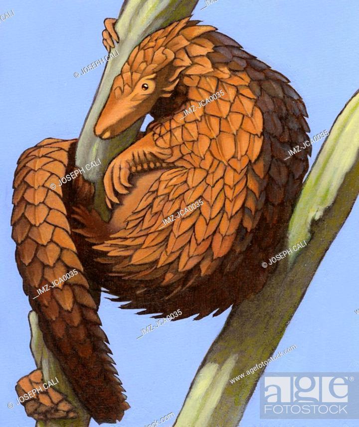 Stock Photo: Illustration of a tree pangolin.