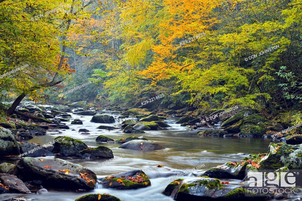 Stock Photo: Autumn foliage overhanging the Little River, Great Smoky Mountains NP, Tennessee, USA.
