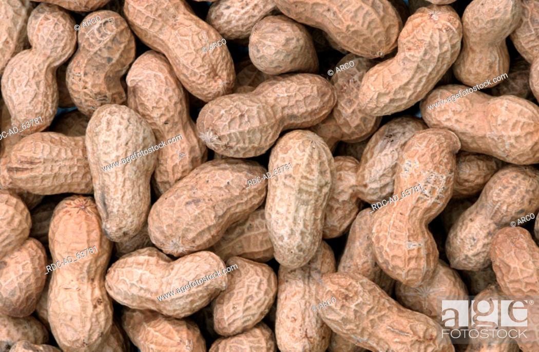 Stock Photo: Peanuts Arachis hypogaea.