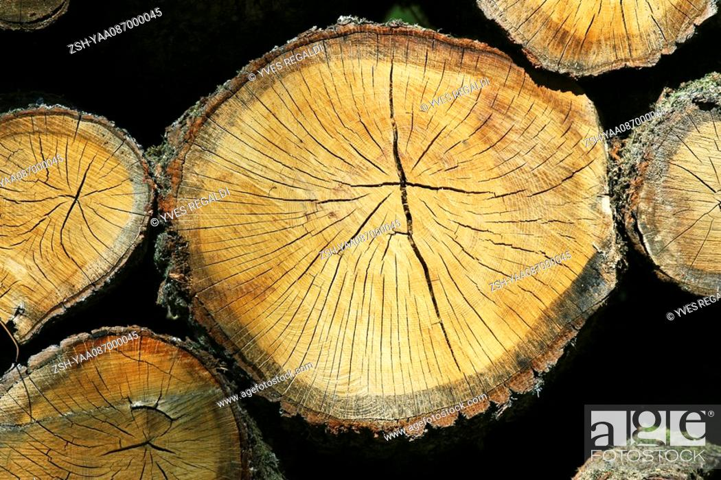 Stock Photo: Firewood, extreme close-up.