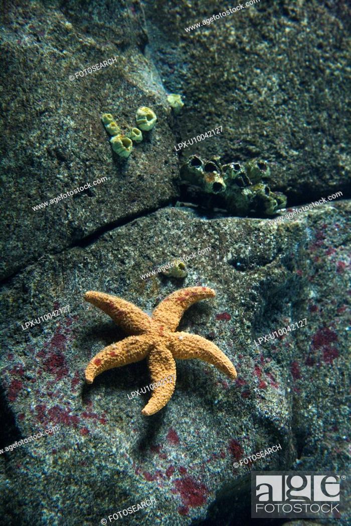 Stock Photo: Starfish on rock surface in aquarium in Lisbon, Spain.