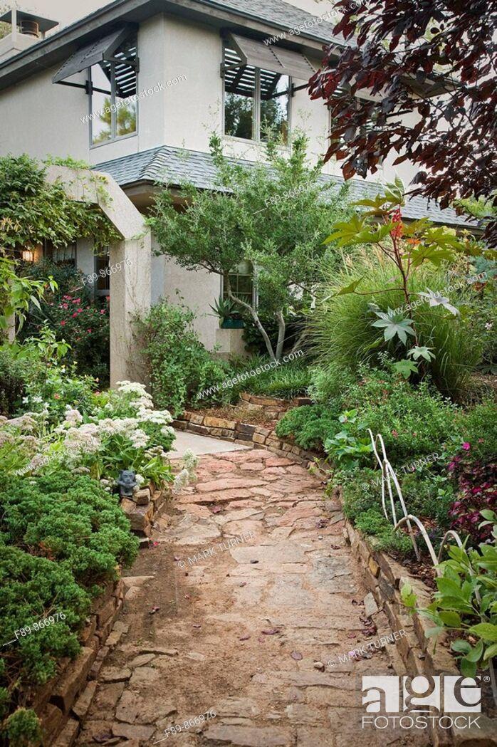 Stock Photo: Sedum, Juniper, Castor Bean beside weathered stone path to home.