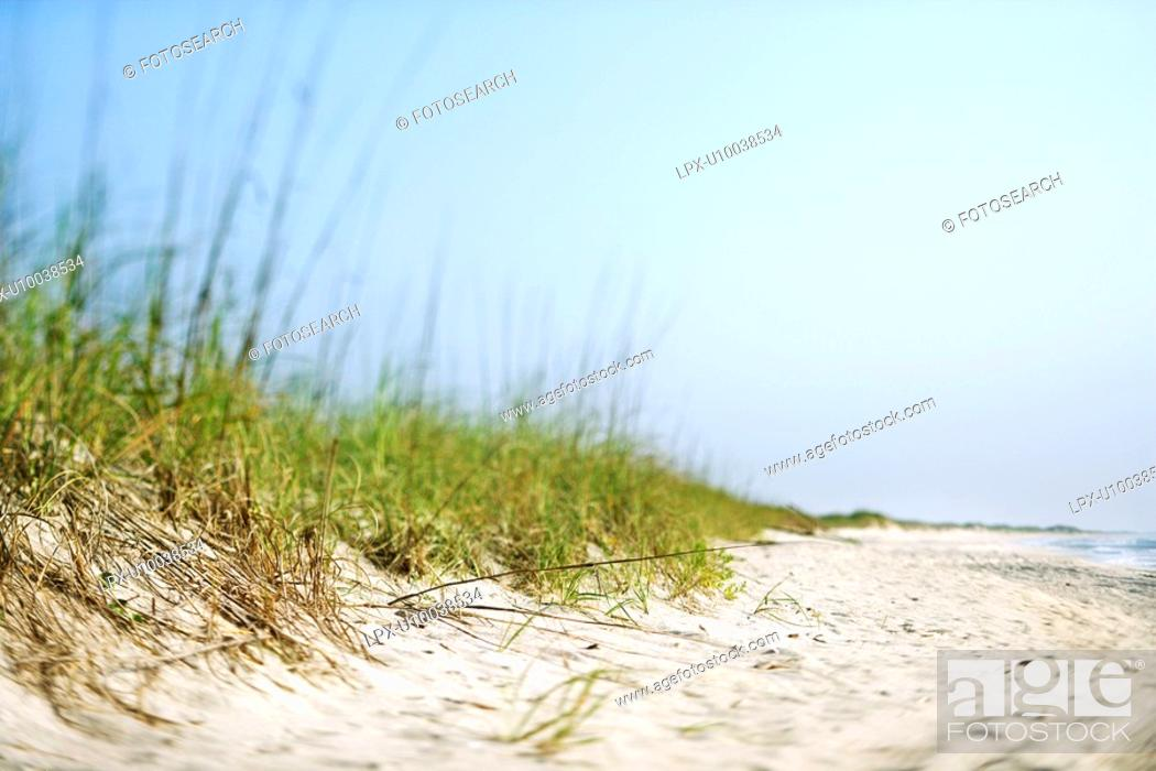 Stock Photo: Sand dune with grass at the beach.