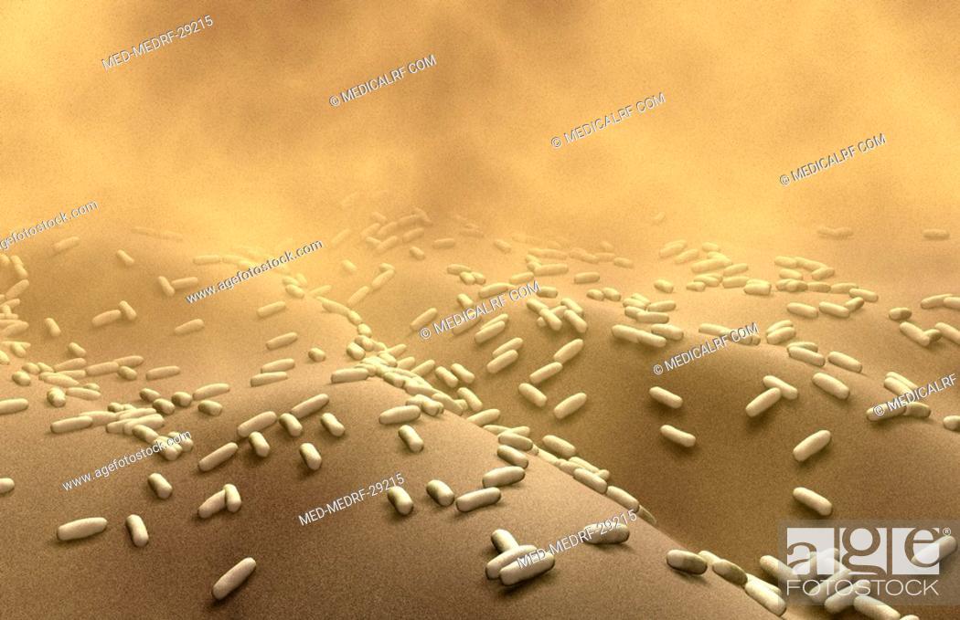 Stock Photo: Rod-shaped bacteria.