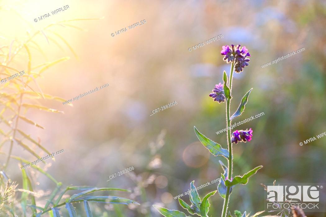 Stock Photo: Nature bathing in golden light.