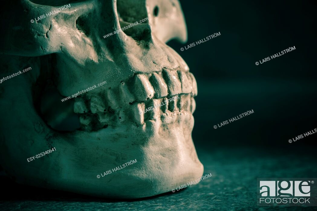 Stock Photo: Human skull with dark background. Close up of teethConcept of death, horror and anatomy. Spooky halloween symbol.