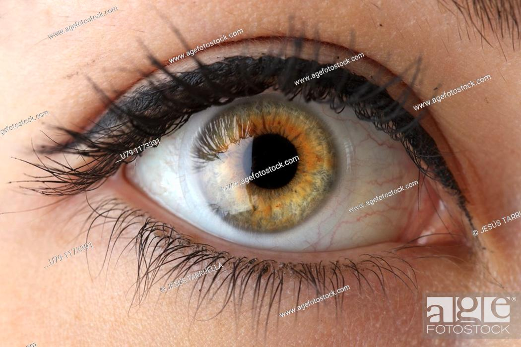 Stock Photo: Macro photography of woman's eye.