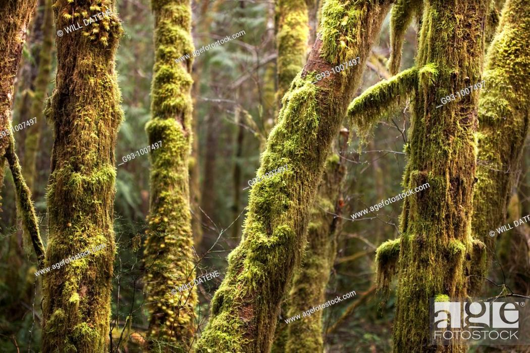 Stock Photo: Trees with moss.