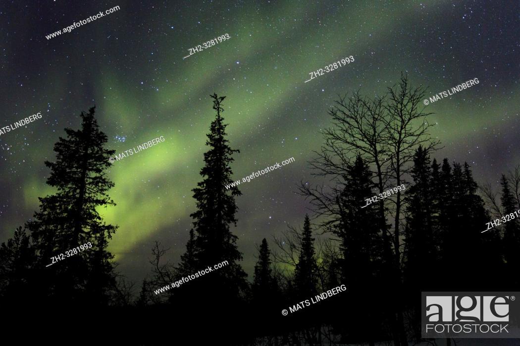 Stock Photo: Northern light, Aurora borealis, colorful sky, Gällivare county, Swedish Lapland, Sweden.