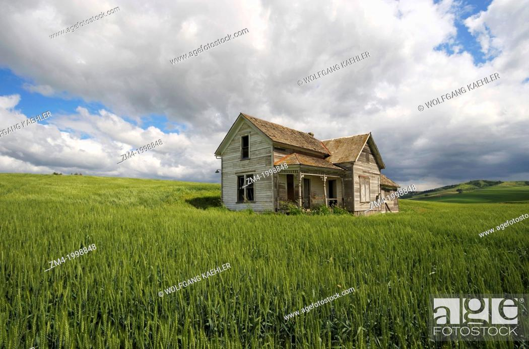 Stock Photo: USA, WASHINGTON STATE, PALOUSE COUNTRY NEAR PULLMAN, ABANDONED FARM HOUSE IN WHEAT FIELD, CUMULUS CLOUDS.
