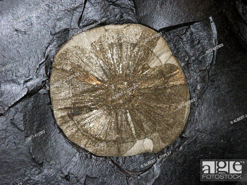 Stock Photo: Pyrite sun.