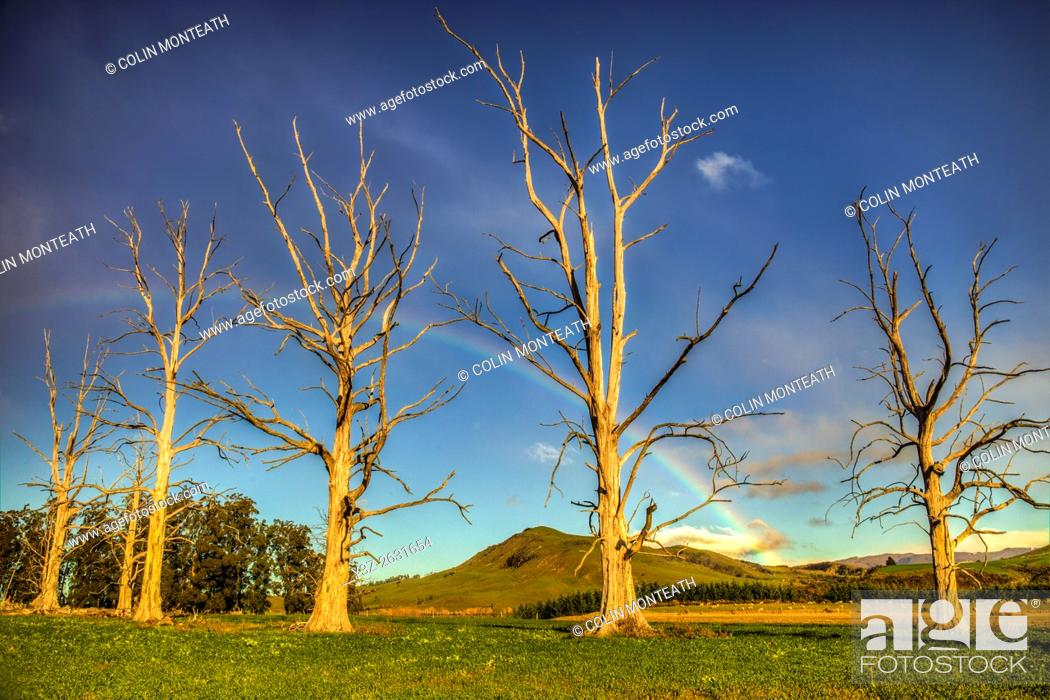 Imagen: Rainbow over dead trees, Cheviot, North Canterbury.