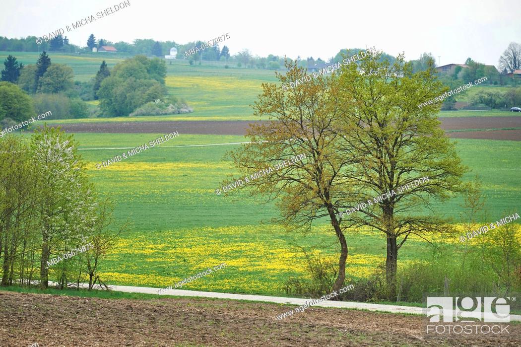 Imagen: Scenery, Upper Palatinate, Bavaria, Germany, Europe.