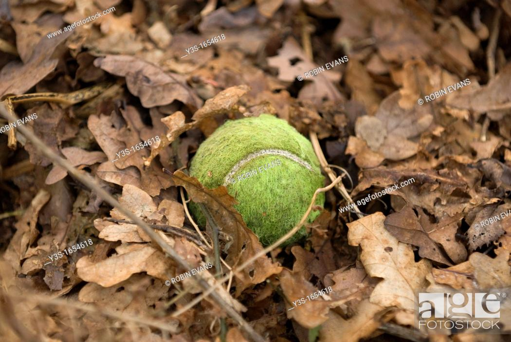 Stock Photo: Tennis ball lost amoungst the autumn leaf fall.