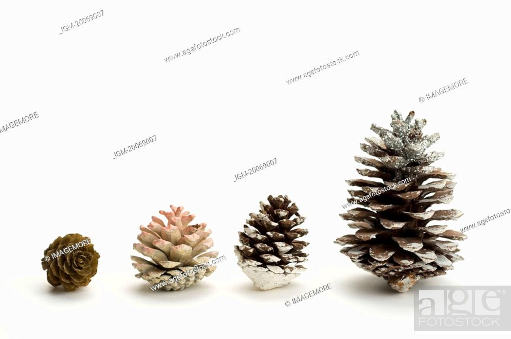 Stock Photo: Pine Cones in a row, different sizes.