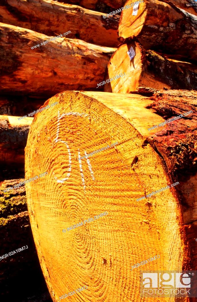 Stock Photo: Cut Logs in a Stack.
