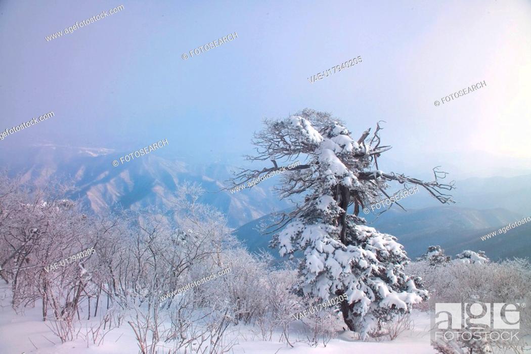 Stock Photo: scenery, snow, landscape, winter, mountain, scene, tree.