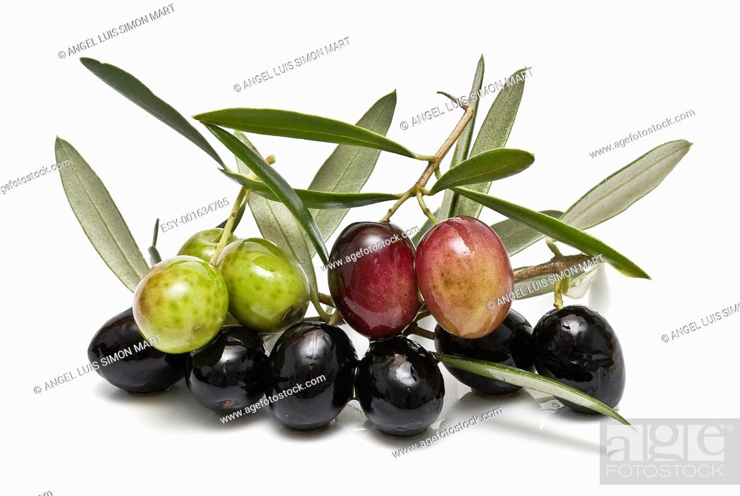 Stock Photo: Branches with some olives.