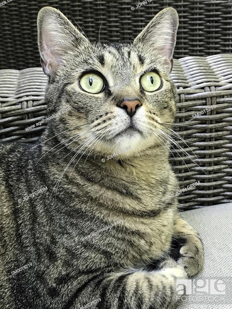 Stock Photo: Cat portrait.