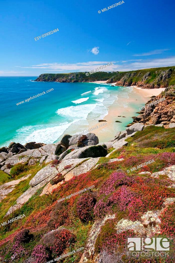 Stock Photo: Heather on the cliffs over beach in Porthcurno, Cornwall, UK.