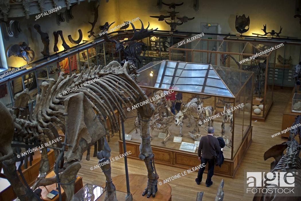 Museum Gallery Of Palaeontology And Comparative Anatomy Jardin Des