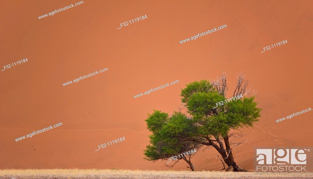 Stock Photo: Dune 45, Sossus Vlei, Sesriem, Namib-Naukluft National Park, Namib Desert, Namibia.