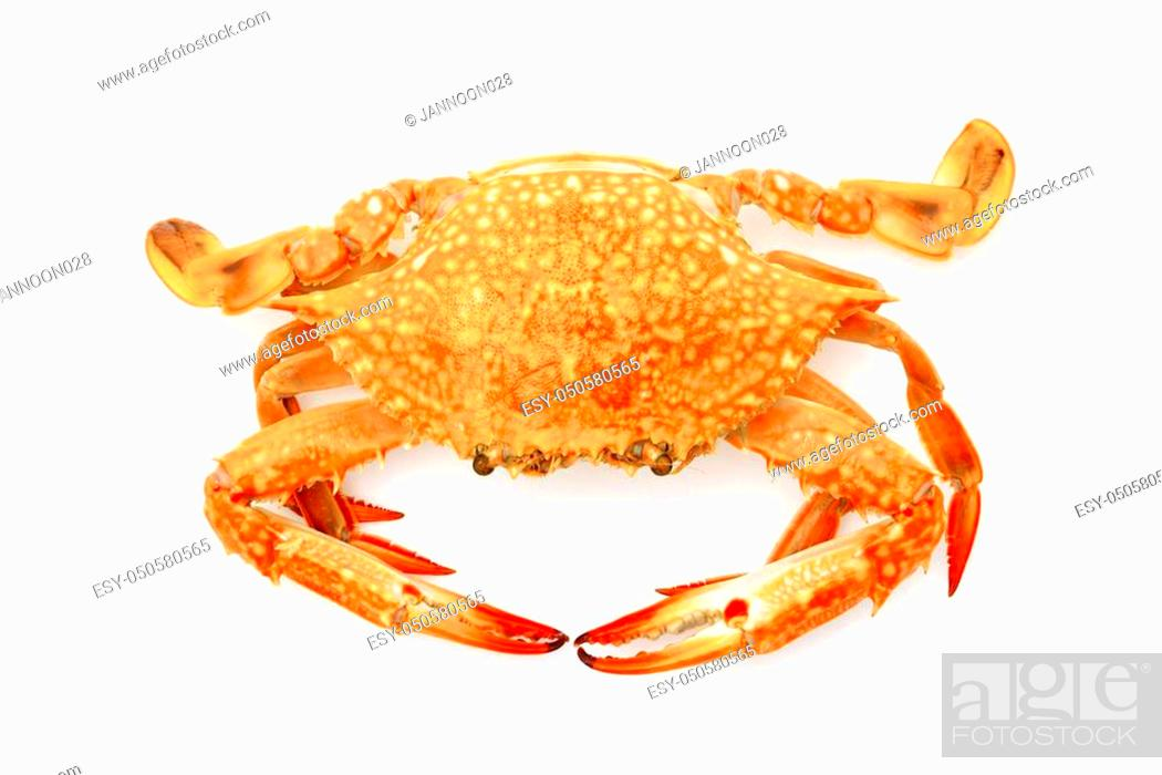 Stock Photo: Steamed crabs on white background.