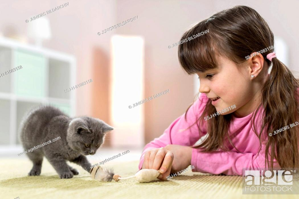 Stock Photo: Chartreux cat. Little girl playing with a kitten. Germany.
