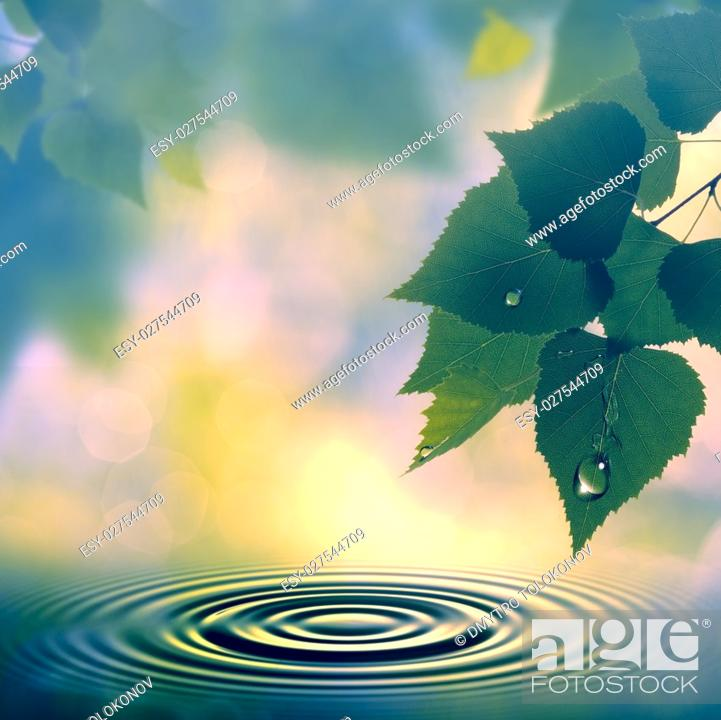 Stock Photo: Morning mist, seasonal backgrounds with morning dew and beech foliage.