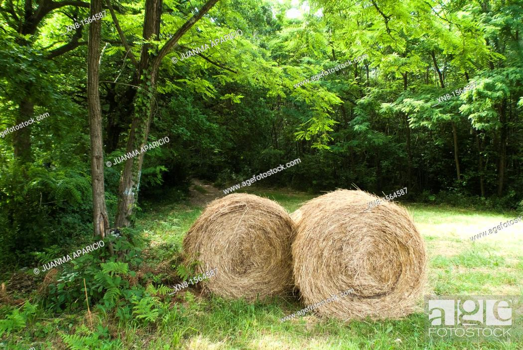 Stock Photo: Two bales of straw on a grass field.
