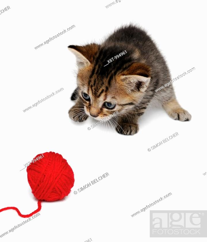 Stock Photo: Kitten Playing with a Ball of Wool.