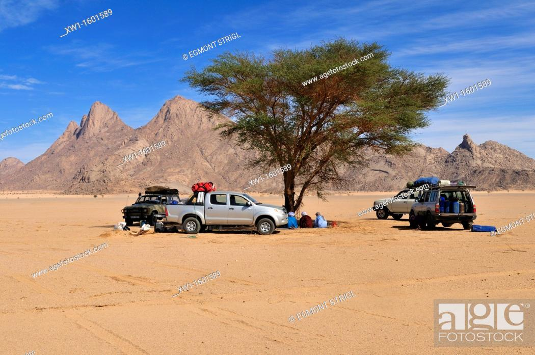 Stock Photo: tourist camp under a shady acacia tree, Adrar n' Ahnet, Algeria, Sahara, North Africa.