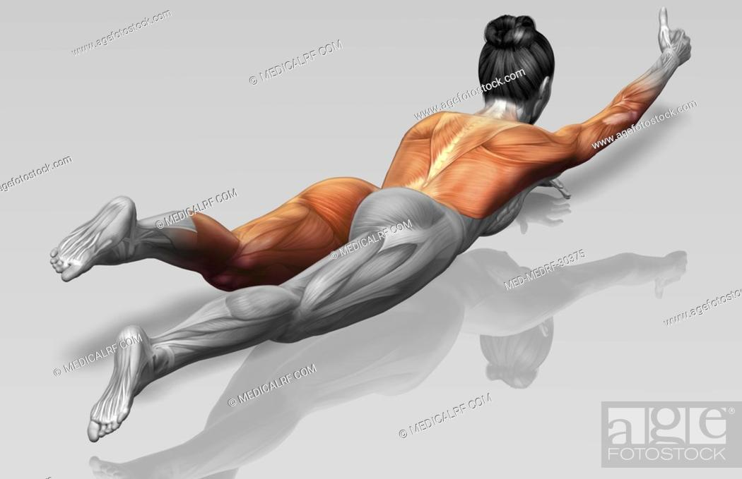Stock Photo: Arm-leg extensions Part 1 of 2.