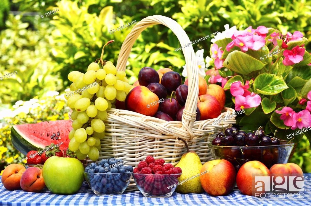 Stock Photo: Basket of fresh organic fruits in the garden.
