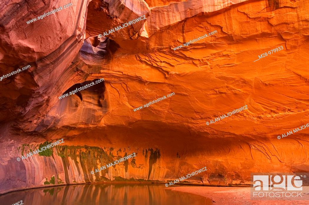 Stock Photo: The Golden Cathedral of Neon Canyon, Grand Staircase Escalante National Monument Utah.