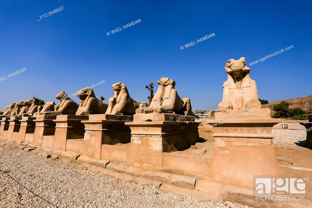 Stock Photo: Sphinx at Temple of Karnak, , Luxor, Egypt.