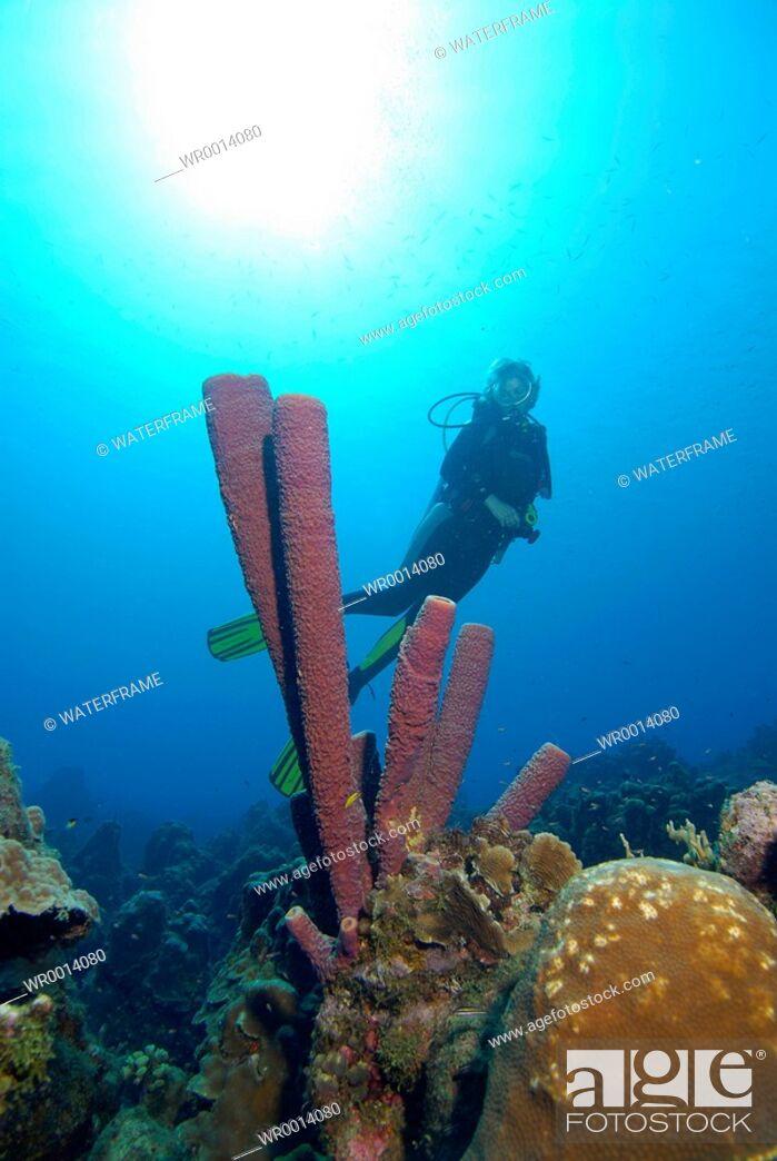 Stock Photo: Scuba Diver and Sponge, Caribbean Sea, Netherland Antilles, Curacao.
