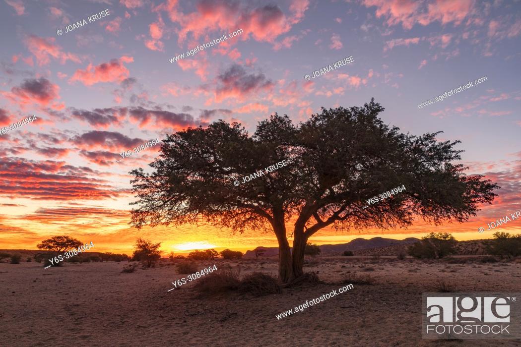 Imagen: Aus, Namibia, Africa.