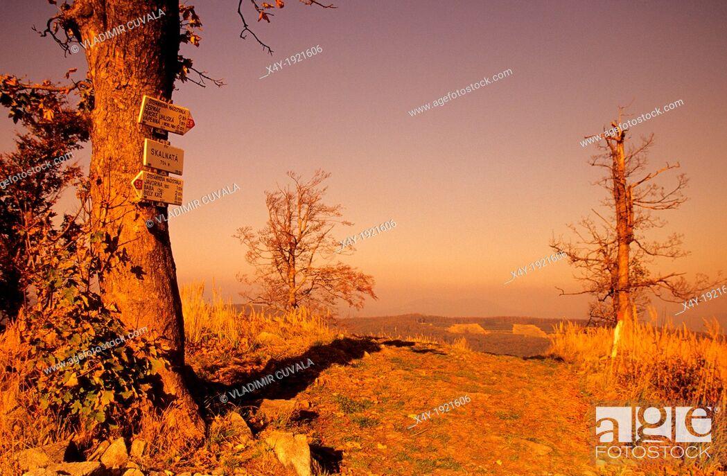 Stock Photo: Solitary tree on the summit of Skalnata used as tourist signpost, Male Karpaty, Slovakia.