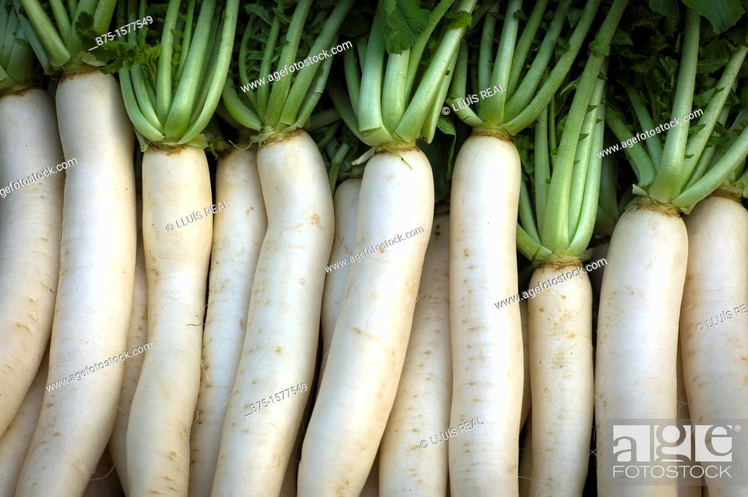 Stock Photo: Turnips, bulb, India, Asia, agriculture.