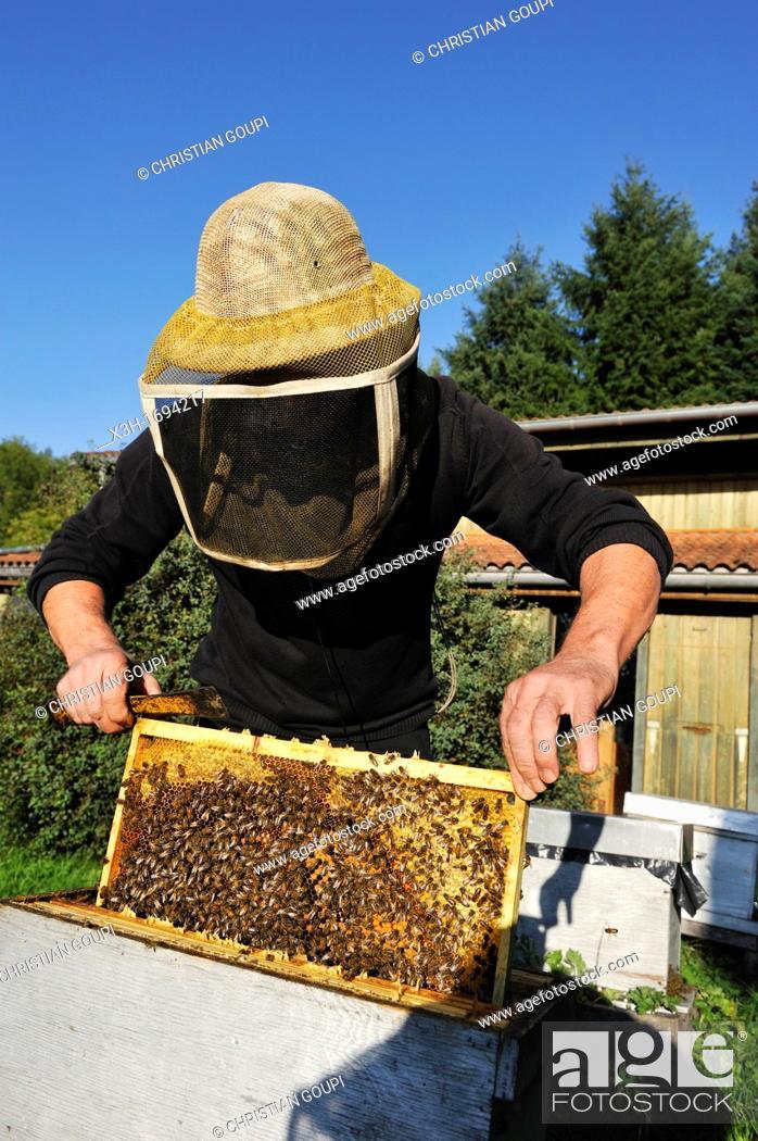 Stock Photo: beekeeper, La Miellerie, Beurrieres, Livradois-Forez Regional Nature Park, Puy-de Dome department, Auvergne region, France, Europe.