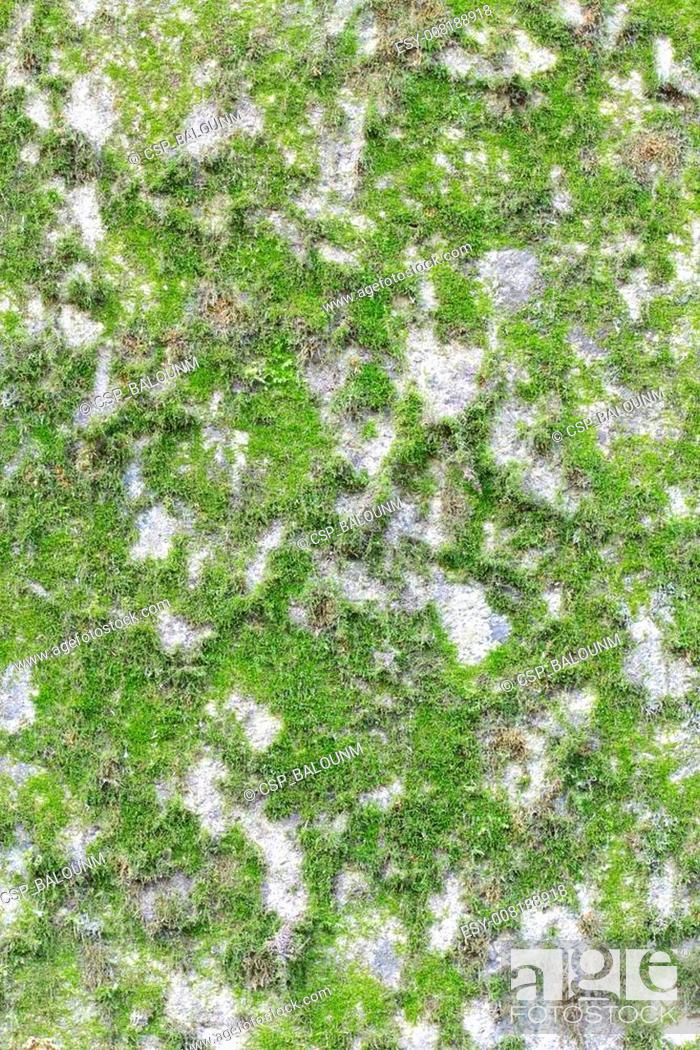 Stock Photo: Abstract wall with lichen and moss background.
