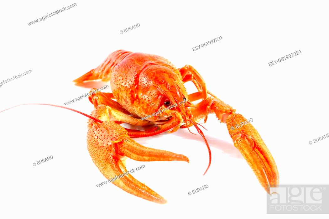 Stock Photo: prepared for eating fresh boiled crayfish as part of a nice dinner.