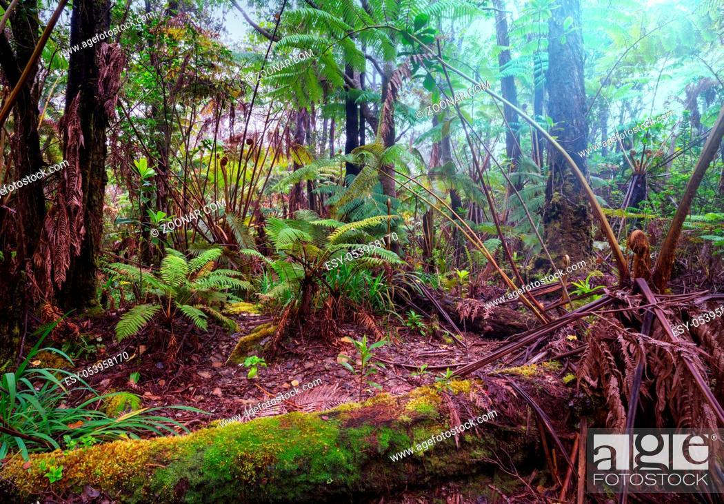 Stock Photo: Gigant fern trees in rainforest, Hawaii island.
