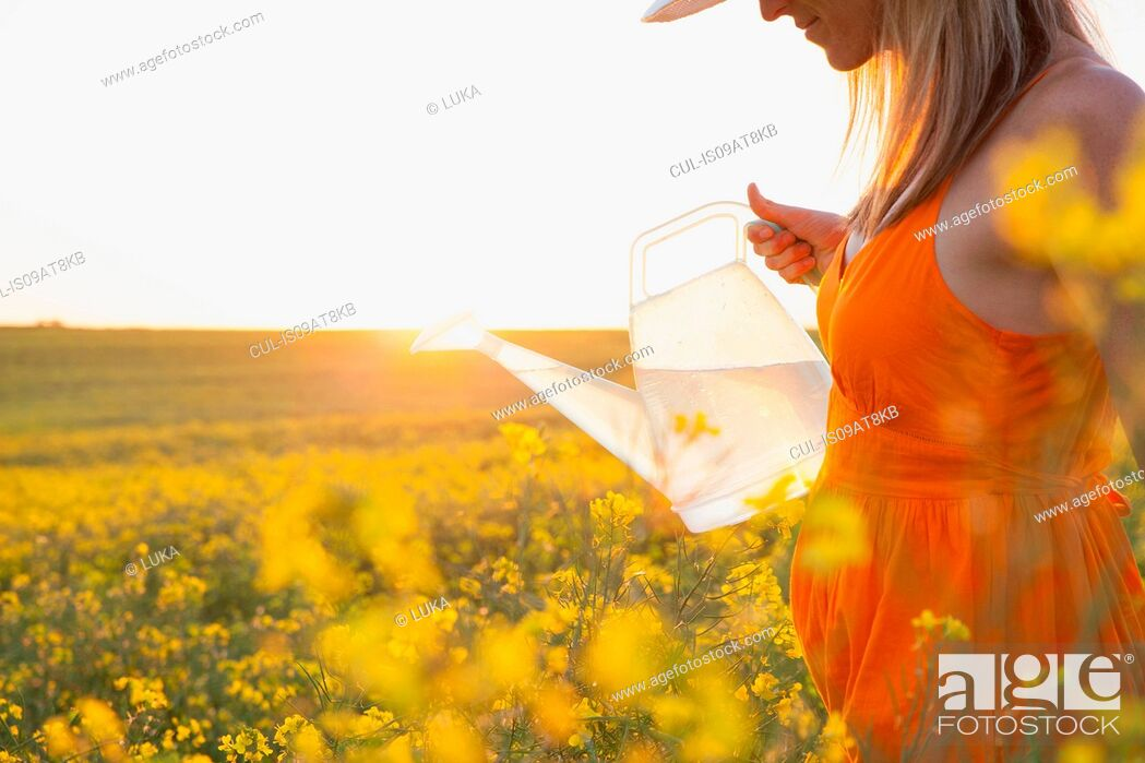 Stock Photo: Cropped view of mid adult woman watering canola with transparent watering can.