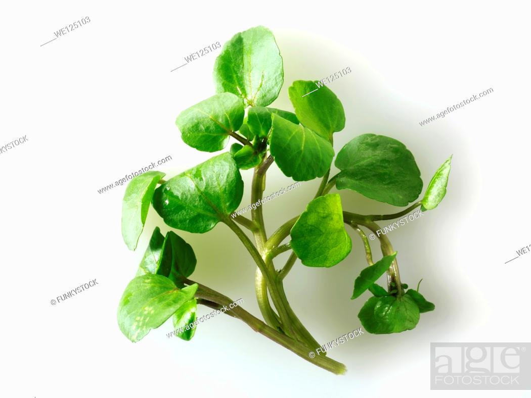 Stock Photo: Fresh watercress leaves.